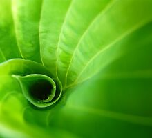 In the Green World by Lena Weiss