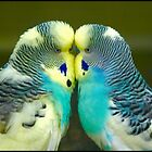 """Budgie Love"" by Ian Midwinter"