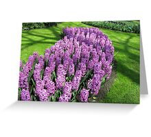 River of Purple - Bed of Hyacinths Greeting Card