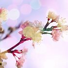Bokeh Blossom #1 by Claire Dimond