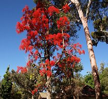 Colour in a West Australian park by georgieboy98