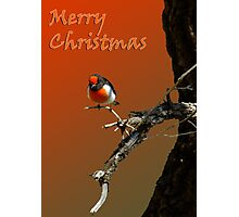 Merry Christmas Red Robin Photographic Print