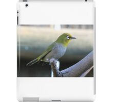 Cape white eye Kabab iPad Case/Skin
