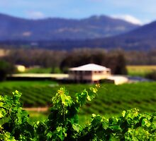 Hunter Valley | Wine Country  by Bill Fonseca