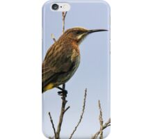Cape Sugar Bird  iPhone Case/Skin