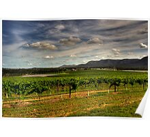 Hunter Valley | Wine Country #2 Poster