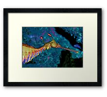 Weedy Sea Dragon Framed Print
