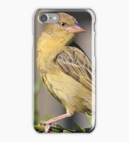 Cape Weaver iPhone Case/Skin