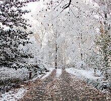 Snow in Natchez by wolfepaw