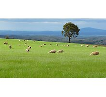 Greener Pastures Photographic Print