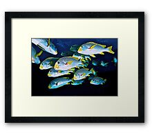 Sweetlips Framed Print