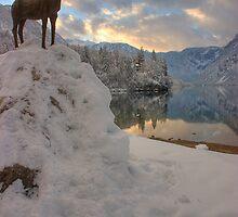 Lake Bohinj, Triglav National Park, Slovenia by Ian Middleton
