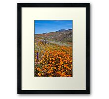 Wildflowers in Wilson Canyon Framed Print
