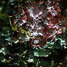 Lichens - Bolivia by Jason Weigner