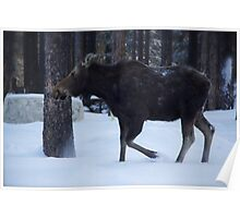 The Winter Moose Poster