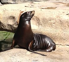 Special California Sea Lion by cute-wildlife