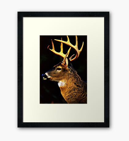 The Guardian 3 Framed Print
