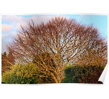 Beautiful Winter Tree,Uplyme Poster