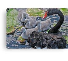 Black swan protecting babies Canvas Print