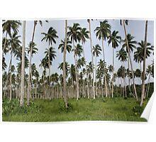 Coconut Plantation Fiji Poster