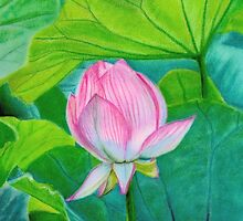 Lotus Flower in Pastel by Erin Nicholls
