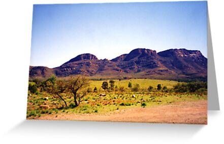 Flinders Ranges by Michael John