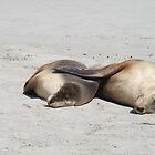 Seal Bay,Kangaroo Island,S.A. by elphonline