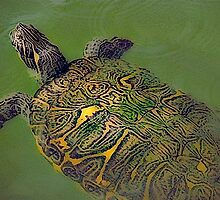Turtle Back. by Malcolm Clark