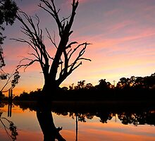Dawn Reflections down by the Murray River by Martin Stringer