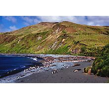 Macquarie Island Beach Photographic Print
