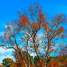The colors of Fall by Erica Sprouse