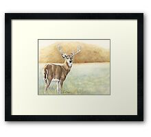 Foggy Morning Buck Framed Print