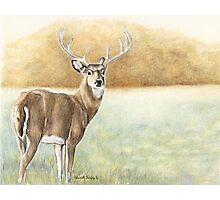 Foggy Morning Buck Photographic Print