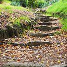 Steps by Meg Hart