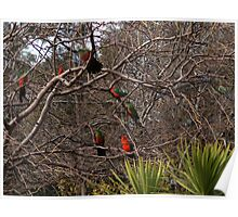 The Parrot Tree Poster