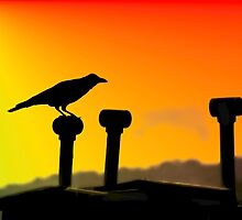 Crow silhouette by pangolily