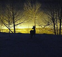 Lonely Vigil by Al Bourassa