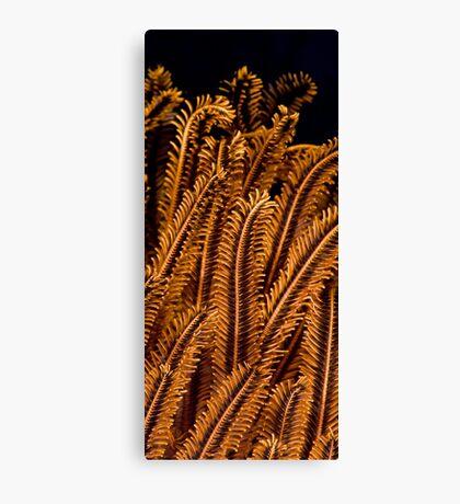 detail coral Canvas Print