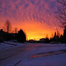 Morning Greeting on our Street by eoconnor