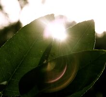 the leaves, the sun, making the weather good at last :) by trinitywilson