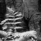 Old tree by Aleksander Stacherski