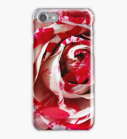 Rose in Red and White iPhone Case/Skin