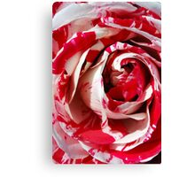 Rose in Red and White Canvas Print