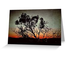 Arbutus Tree at Sunset Greeting Card