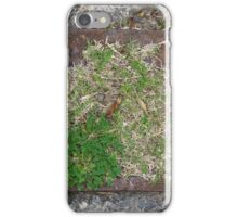 Natural Frame  iPhone Case/Skin