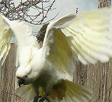 spread ya wings by flipteez