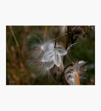 Five Seeds for the Wind Photographic Print