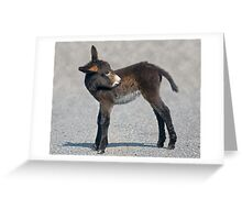 Baby Donkey Greeting Card