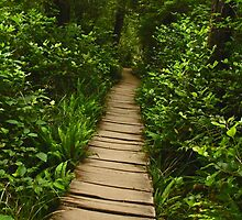 Cape Flattery Trail by Barbara  Brown