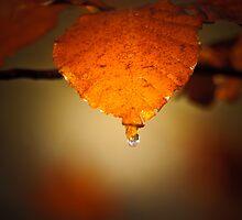 Tear Drops by CJTill